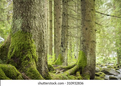 trees in deep green forest