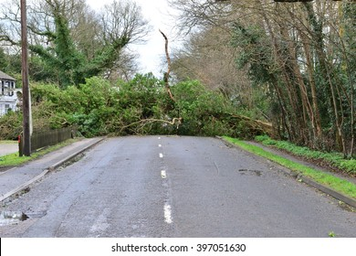 Tree's down on the Balcombe road in Horley, Surrey on the morning after Storm Katie.