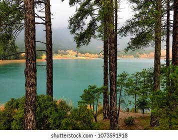 Trees in Doxa lake