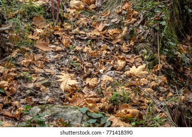 Trees dropped the leaves on the gorund at season of autumn