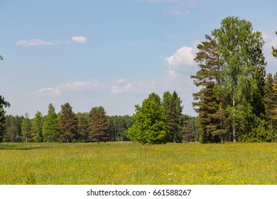 Trees at the edge of the forest
