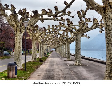 Trees in embankment of town of Vevey and Lake Geneva, canton of Vaud, Switzerland