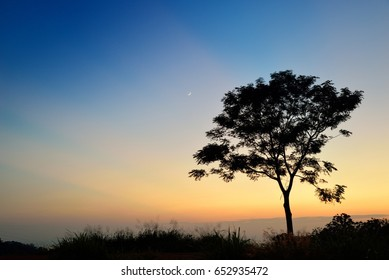 Trees evening light moon