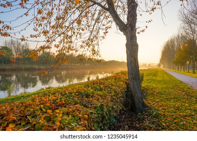 Trees in fall colors along a canal in a green meadow in sunlight at sunset