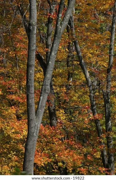 Trees in Fall Foliage