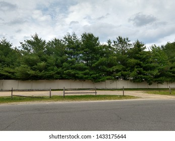 Trees with Fence and Blacktop