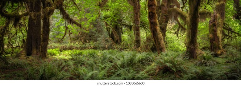 Trees and ferns in the Hoh rain forest in Washington, USA