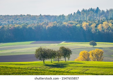 Trees in the field at autumn time