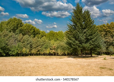 trees, field and blue sky