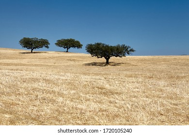 Trees in the field on a sunny summer day during holiday trip in Algarve, Portugal