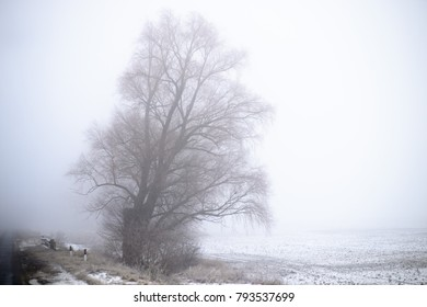 Trees in the field in winter