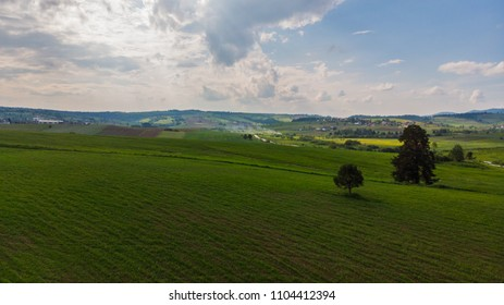 trees and fields on sunny day