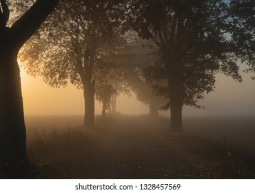 Trees in fog - Shutterstock ID 1328457569