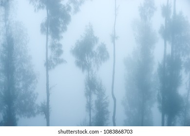 trees in the fog beautiful design background for the project or site hats