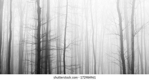 Trees in fog, black and white picture