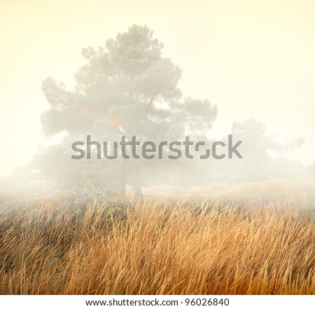 Trees in a fog - mist scenery with high grasses in foreground