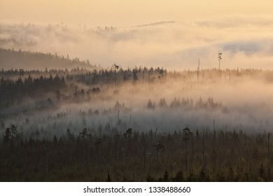 Trees in the fog on mountains in the backlight in the early morning at sunrise