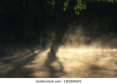 Trees in fog, shade and sunlight