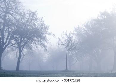 trees in fog, unfocused