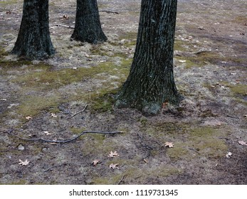 Trees and Forest Floor - Woodland nature scene with copy space.