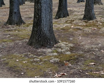 Trees and Forest Floor - Woodland trunks with copy space.