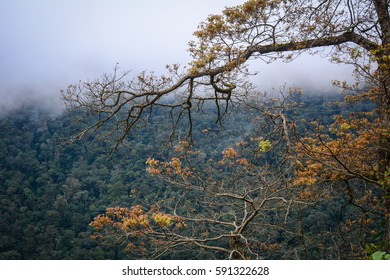 Trees at the forest with fog in Lang Biang Highlands, Vietnam.