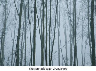 Trees in a forest in the mist