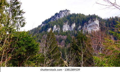 Trees, forest and rocks in the Entlebuch UNESCO Biosphere Reserve on a spring day