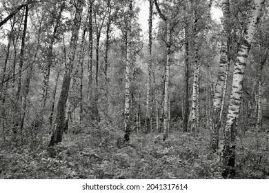 The trees in forest, Siberia, Krasnoyarsk, Russia.