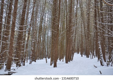 Trees in the forest in winter season