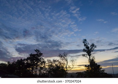trees of a forest in winter, silhouettes against evening sky