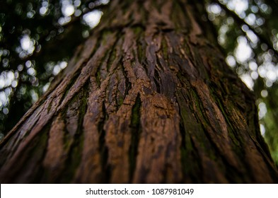 Trees, Forrest and Wooden Backrounds