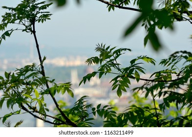 Trees frame the view over the city of Budapest. The city is out of focus, but the red dome of a cathedral can be seen.