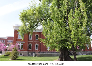 Trees in front of the Cache county Utah visitors center