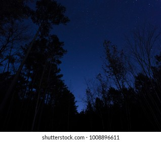 Trees in front of a star filled sky in North Carolina