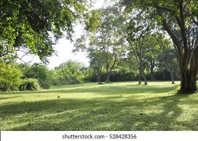 Garden Tree Images Stock Photos Vectors Shutterstock