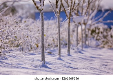 Trees in the garden in the winter. Winter garden in the village. Agronomy.