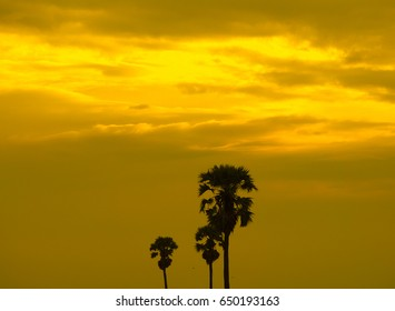 trees and gold sky