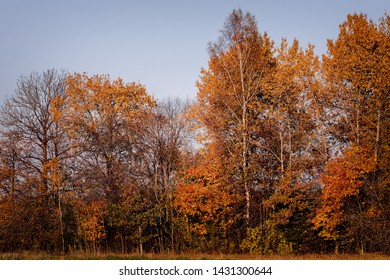 Trees in the golden fall