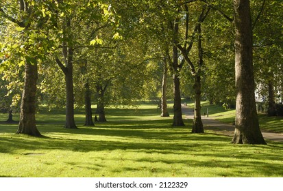 trees and grass