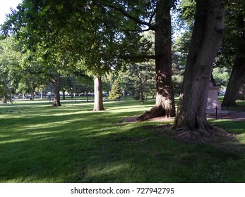 Trees and grass, Boston Public Garden, Boston, Massachusetts, USA