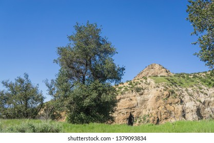 Trees and grass grow in rock valley in the wilderness of southern California.