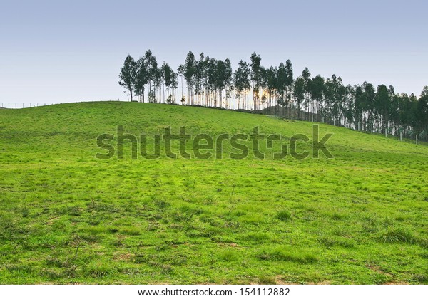 Trees and grass at the mount of Vilanovina