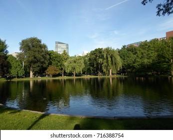 Trees, grass and pond, Boston Public Garden, Boston, Massachusetts, USA
