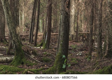 trees in green forest with moss and dark colors. mysterious forest. darkness in the forest  Latvia