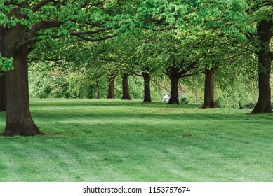 Trees and Green Grass, United Kingdom