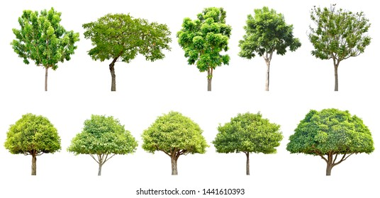Trees green leaves and bonsai. Isolated on white background (clipping path) total of 10