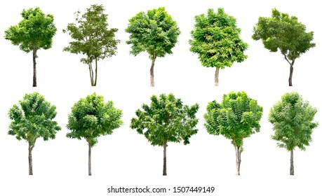 Trees green leaves.  Isolated on white background (clipping path) - total of 10