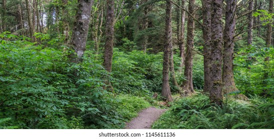 Trees and greenery form a panorama of Oregon coastal forest.