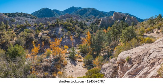 Trees grow in canyon of Mojave desert rock formations.